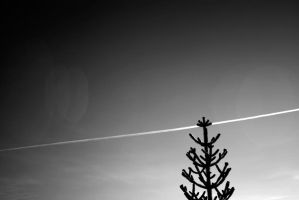 Tree and trail by Hxes