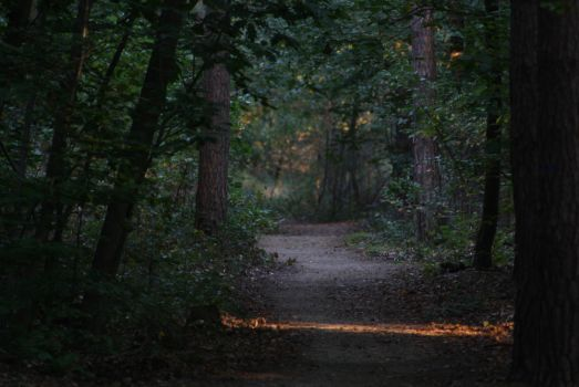 Way in the woods by crdy