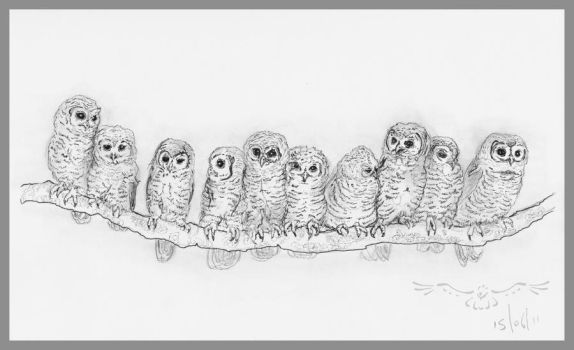 St Tiggywinkles Owlets by cerimair