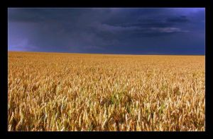 Wheat II by Hocusfocus55
