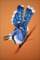 Blue Jay by Verenique