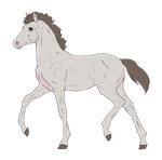 N3458 Padro Foal Design by casinuba