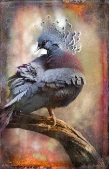 Finer Feathered Friends- Crested Dove by ashapiro515
