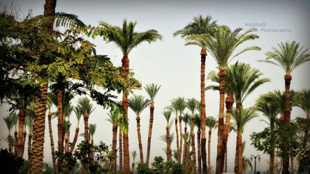 Valley of Palms by haggaghm