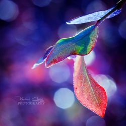 .:Autumn Leaves Abstract:. by RHCheng