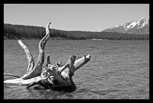 gnarled roots by badkitty06