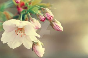 Flower by EMHPhotography