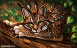 Lynx's Feathers by FlashW