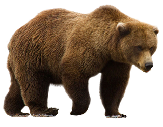 unrestricted hq bear 4 by aio350