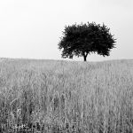 The Tree. by marc-bruno