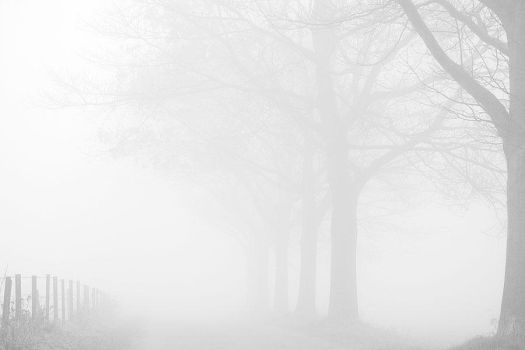 Fog by Astroandre