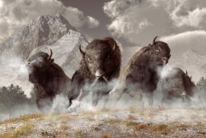 Buffalo by deskridge