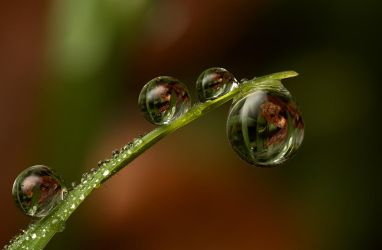 Natural Refractions 1 by Alliec