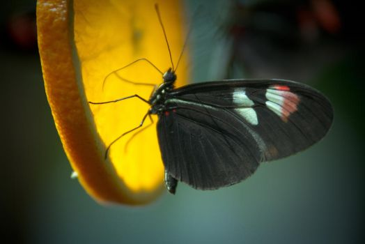 Beautiful Butterfly by Desire--and--Sin