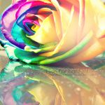 Reflection of colour by EliseEnchanted