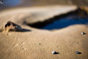 The Shells by ximo
