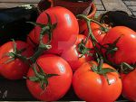 Tomatoes by IsabelleEscapade