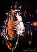 Budwesier Clydesdale by kittykitty5150