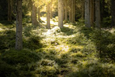 Forest 9 by Lakela