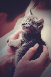 baby cat II by AngelxBaby