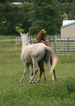 Horse Interaction .:Stock:. by Photopolis