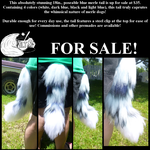 Blue Merle For Sale by GuardiansWish