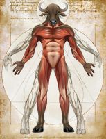 Minotaur Anatomy- Natural History of the Fantastic by Christopher-Stoll
