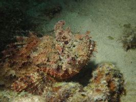 Scorpionfish by Meagharan