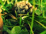 Droplet in Autumn by ANorthernStar