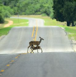 Road block on a local road. by nolra