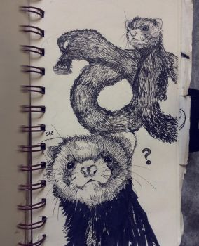 Ferrets by Disegnophilia