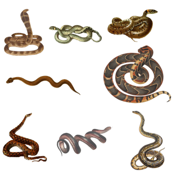 Variety of Snakes PNG by chaseandlinda