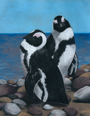 African Penguins by whitetippedwaves