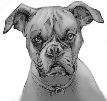 Grayscale Boxer by AsaWillow