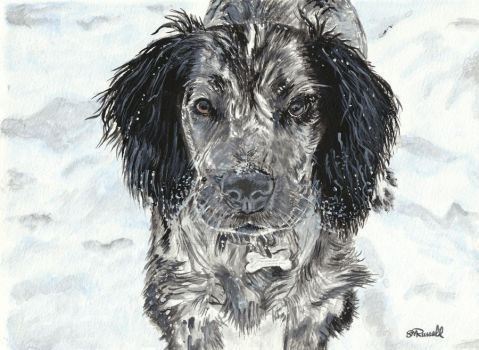 Cocker Spaniel watercolour by SRussellart