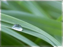 Raindrop on gras by Halligen