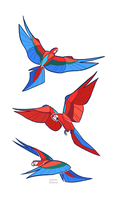 Studies - Macaw by oxboxer