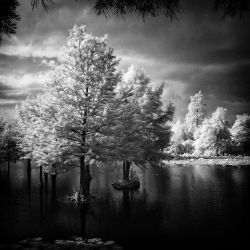 Water Cypresses infrared by MichiLauke