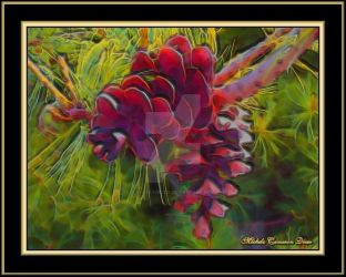 Pine Cones by angelfire226