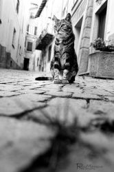 Street life by roccomal