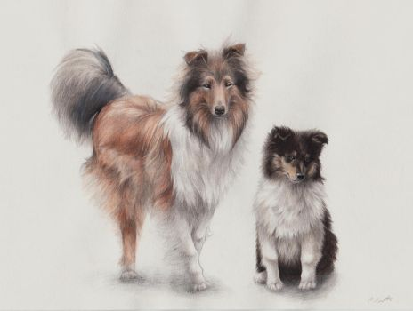 Rough collies by ChloeNArt