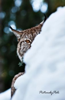 I See You by PictureByPali