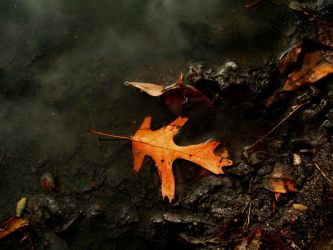 Leaf in Puddle by sketchydreamerstock