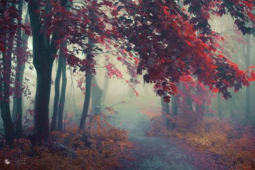 Shelter for a moment by ildiko-neer