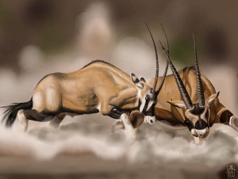 Scimitar-Horned Oryx Duel by digitalchet