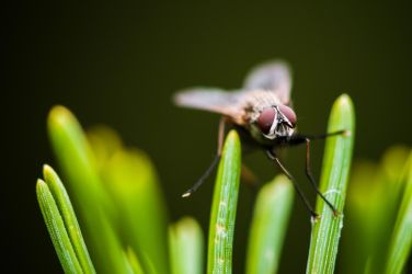 fly on pines by cmeeren