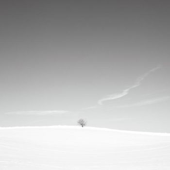 alone in the white II by indojo