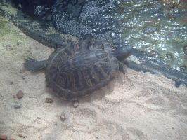 Turtle by SineadCatherine