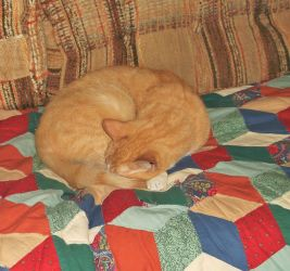 Butterscotch aka Scotty curlycued on the couch by MystMoonstruck
