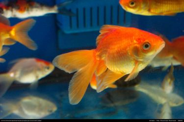Fish Stock 0002 by phantompanther-stock